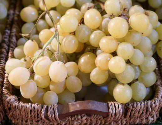 "Il vino ""vegan"" vede la Toscana protagonista"