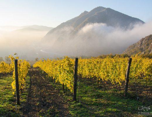 Timorasso, il grande vino dalle terre di Fausto Coppi