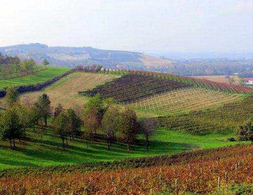 Week-end a Dogliani. Qui il vino è anche nel nome