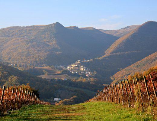 Serrapetrona: piccolo territorio, piccola produzione, grande vino